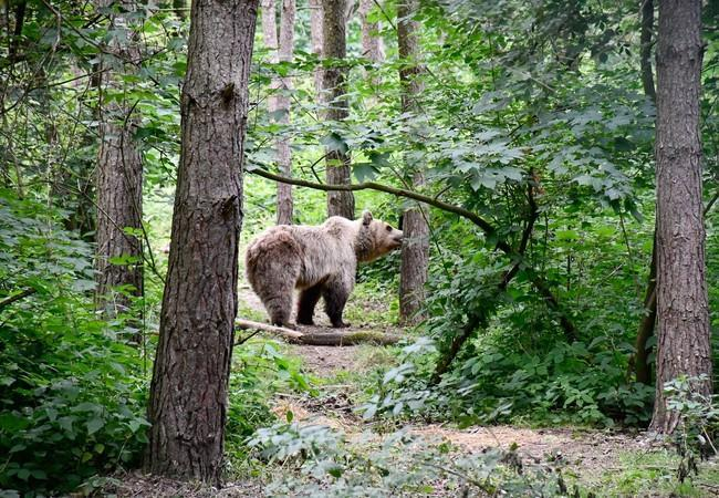 Luna erkundet den Wald