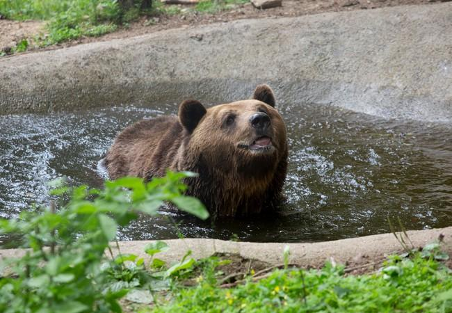 Bear Standy at DANCING BEARS PARK Belitsa