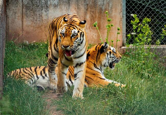 Sahib und Jill in der TIERART Wildtierstation