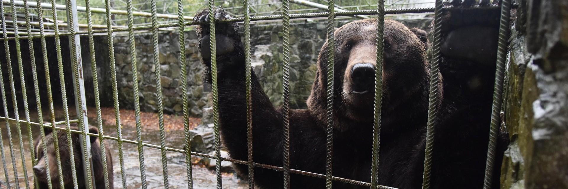 Bears behind bars