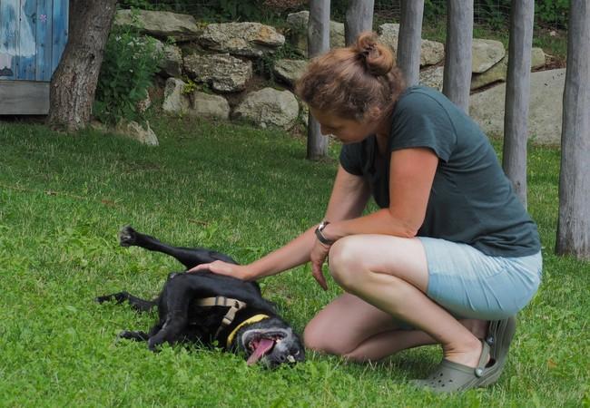 Sigrid streichelt einen Hund der vergnügt in der Wiese hin und her rollt.