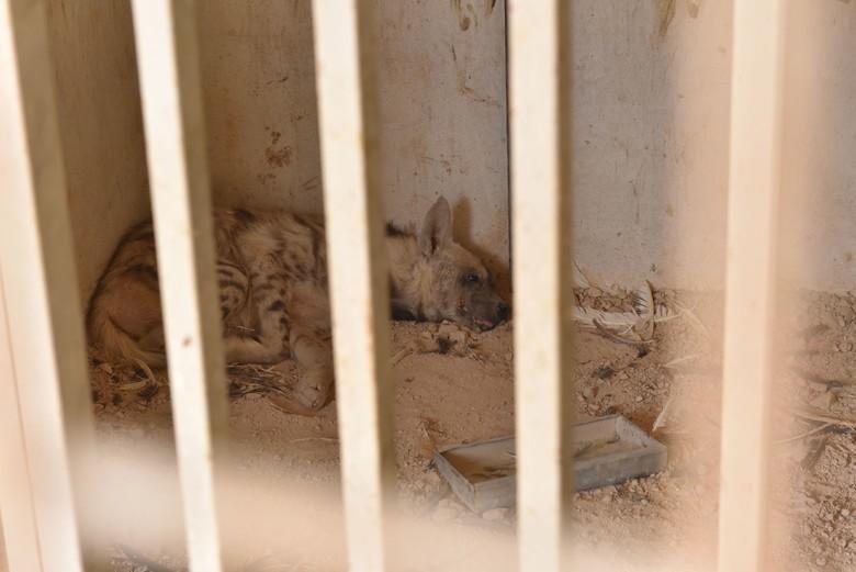 Elendes Dahinvegetieren im Käfig