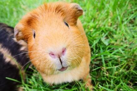 Companion Animals - Topics - Campaigns & Topics - FOUR PAWS