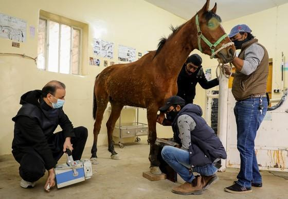 More equines treated