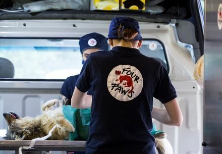 Mobile veterinary clinic of FOUR PAWS Bulgaria