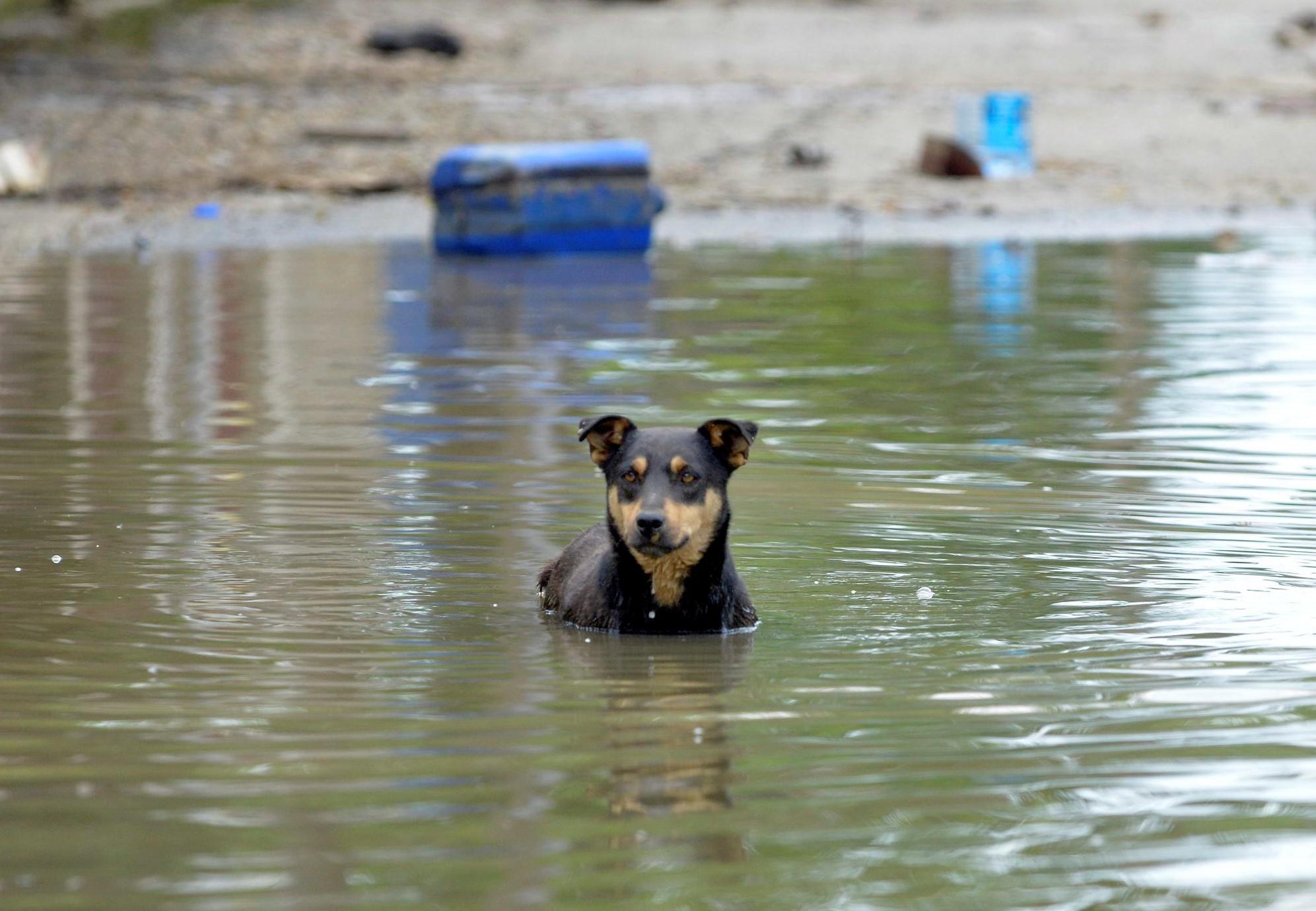 Aide de QUATRE PATTES aux animaux sinistrés sur la côte est américaine
