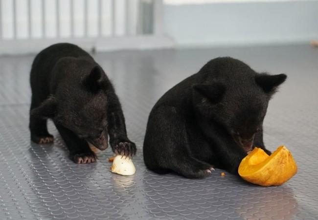 Les oursons Mi et Tam découvrent leur environnement en sécurité