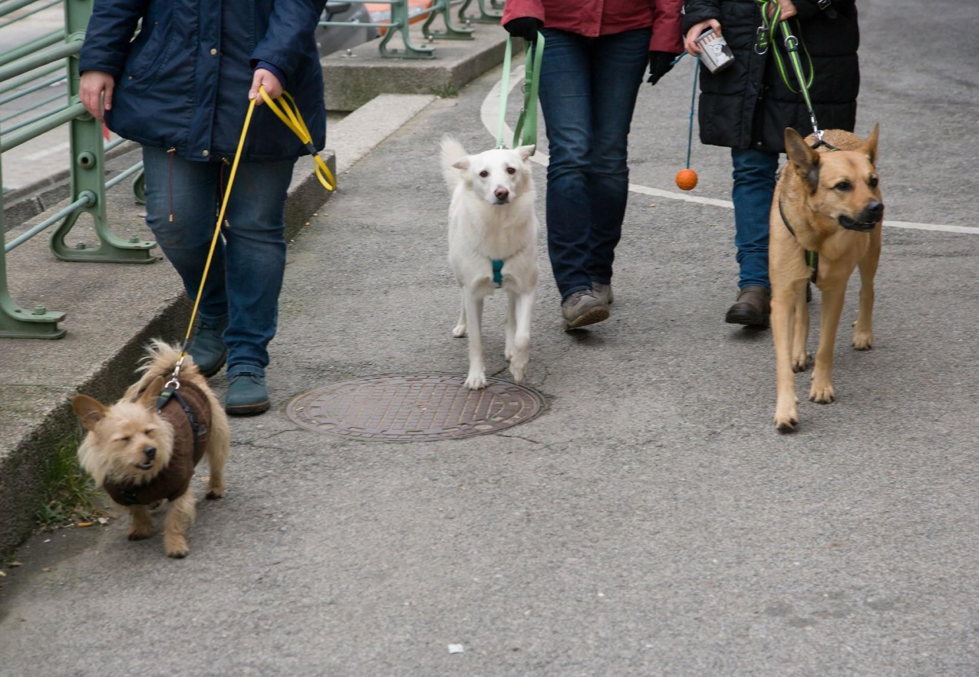 Hunde an der Leine (c) VIER PFOTEN