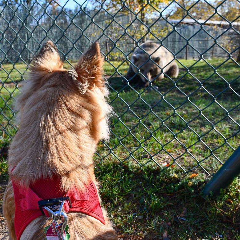 Hund trifft auf Bär