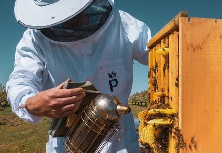 Honigprinz mit Bienenstock