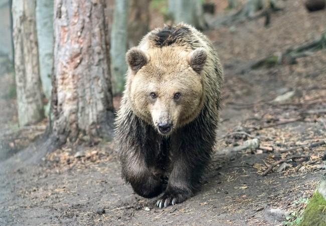 Bear Jeta, 2017