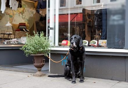 Dog tied outside of shop