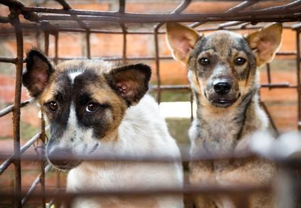 Honden Neary en Sopol in een kooi