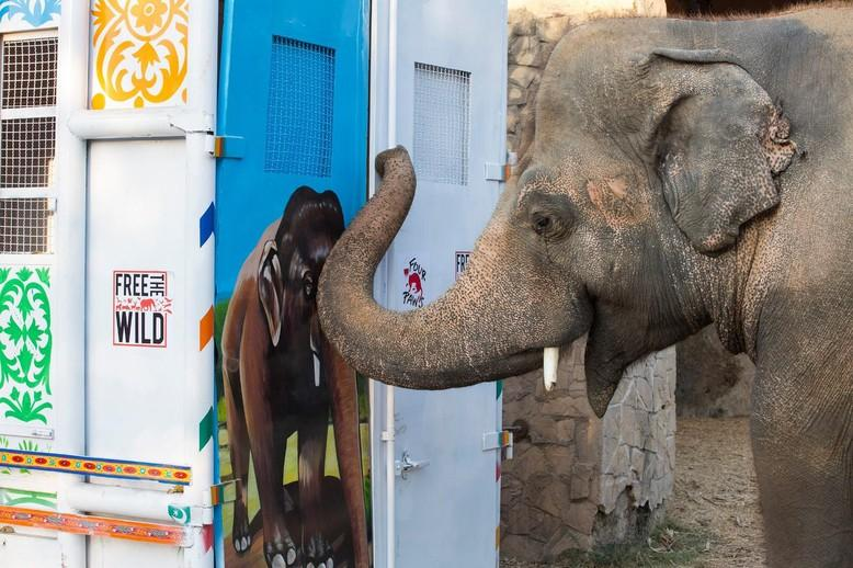 Kaavan mit seiner Transportbox