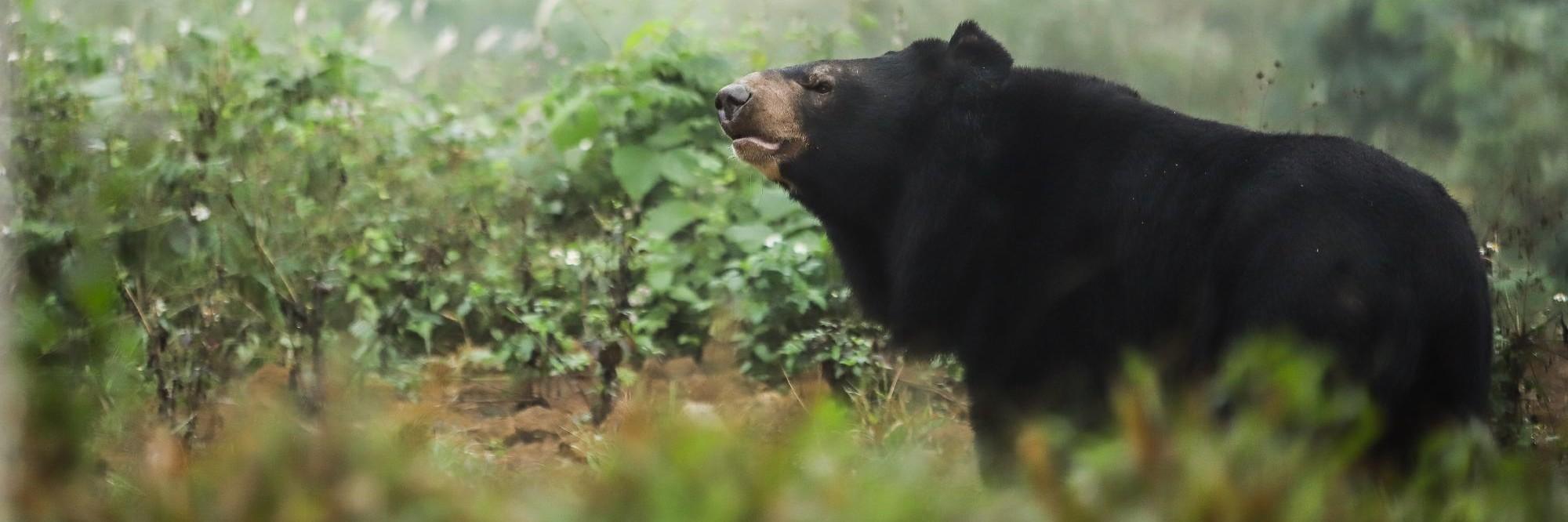 Bear in Ninh Binh