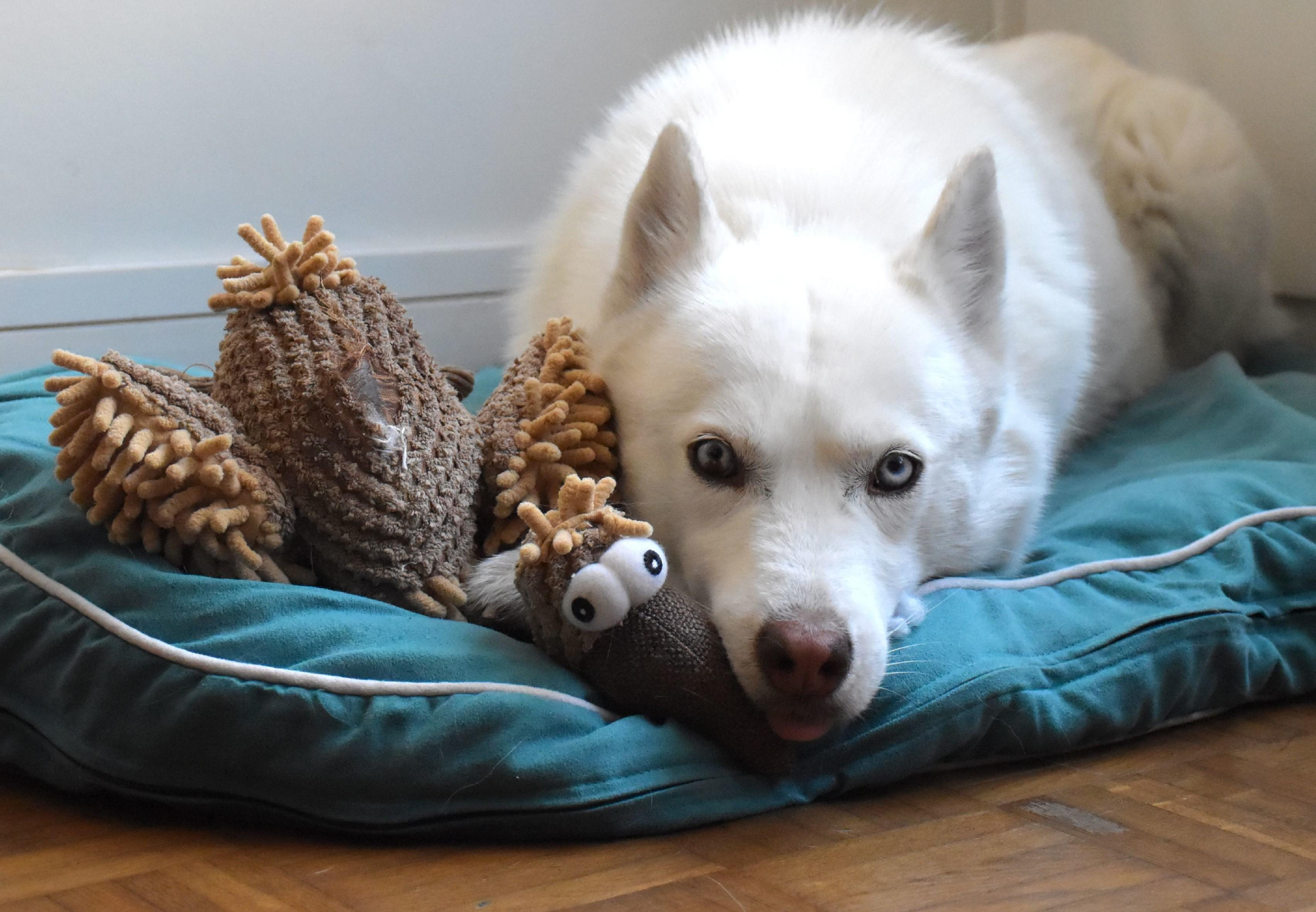 Dog at home