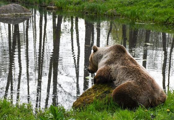 Rocco fischt Salat aus dem Teich