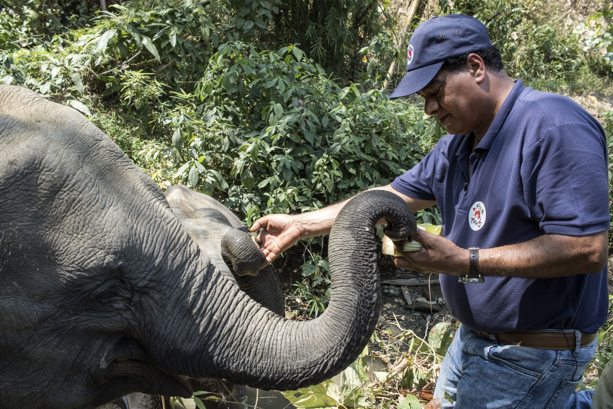 VIER PFOTEN hilft Elefanten in Not