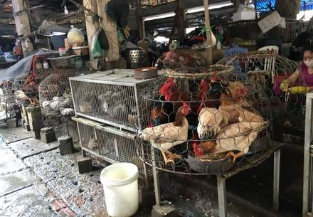 Live animal markets