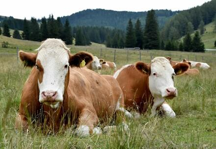 Farm animals need our help