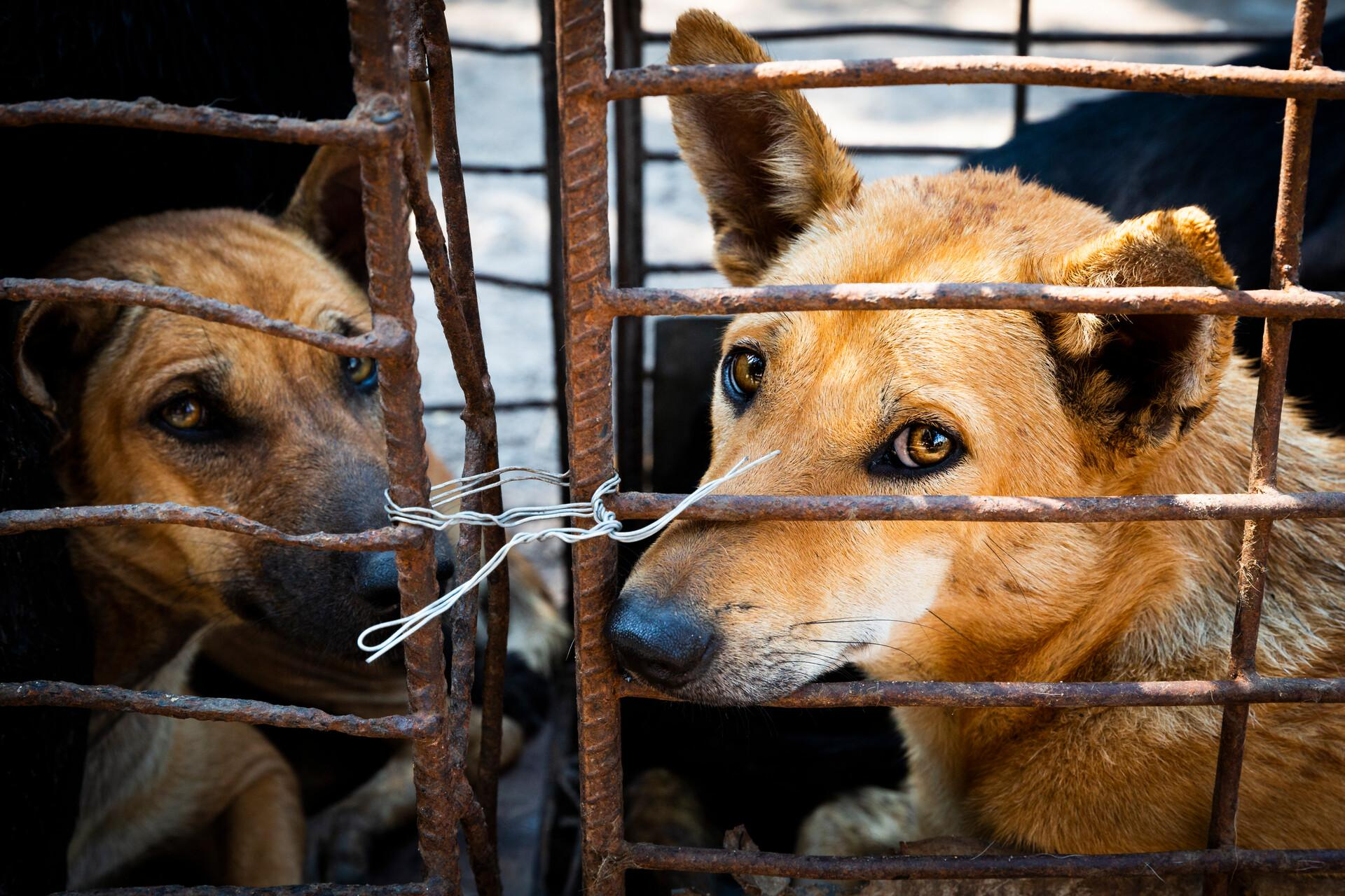 Help for Stray Animals - Topics - Campaigns & Topics - FOUR