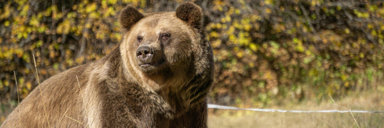 Bear Teddy at DANCING BEARS PARK Belitsa