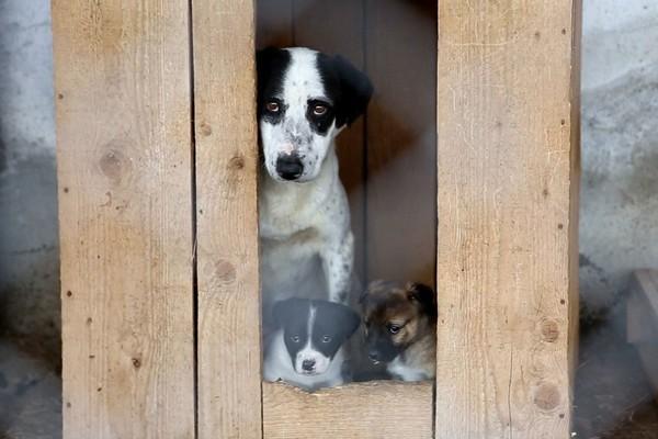 Hund und Welpen im Tierheim