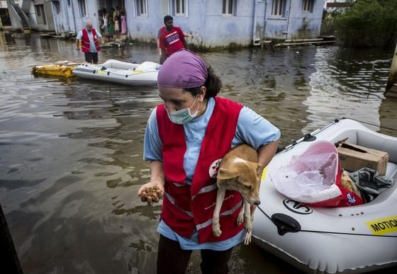 Saving animals during the floods