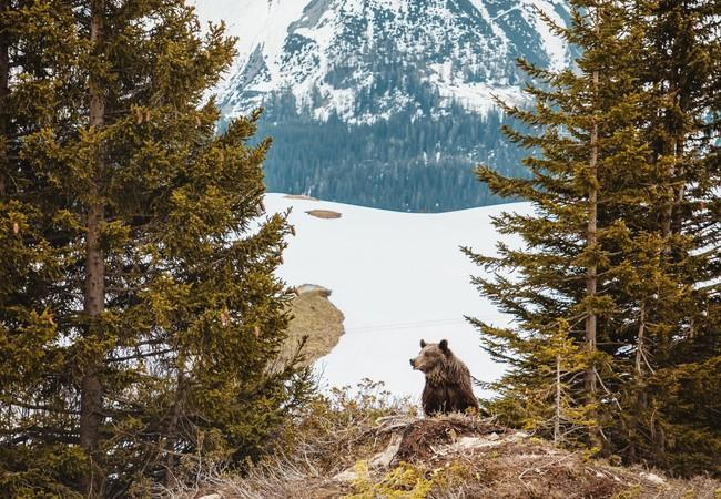 Jambolina in ihrem neuen zu Hause im Arosa Bärenland