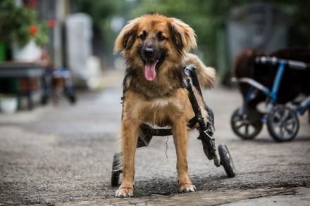 Rolstoel voor een verlamde hond
