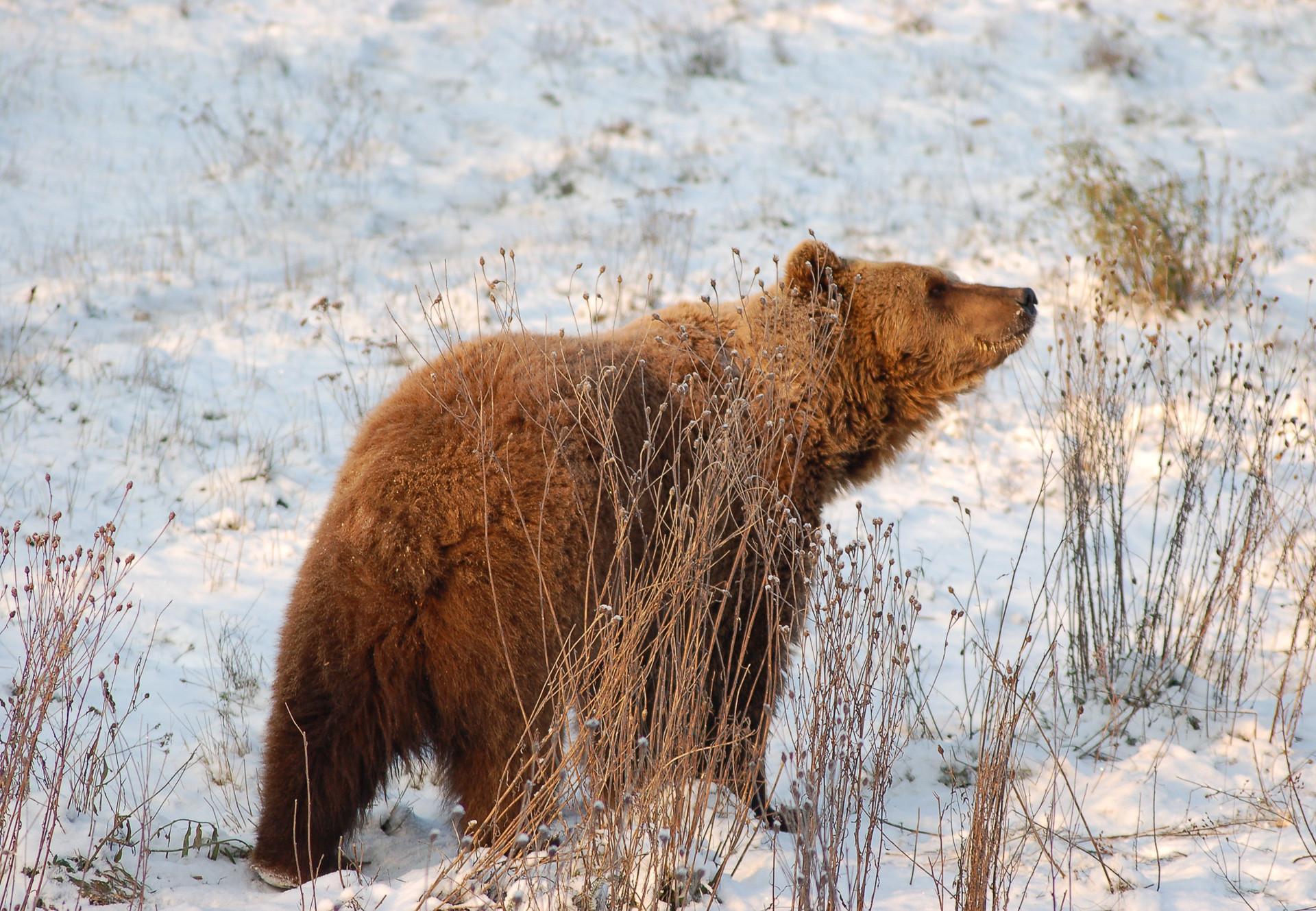 Felix im Winter
