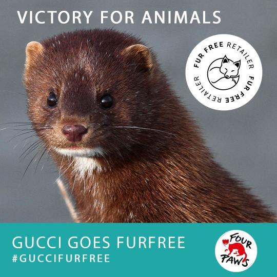 mink-gucci-furfree