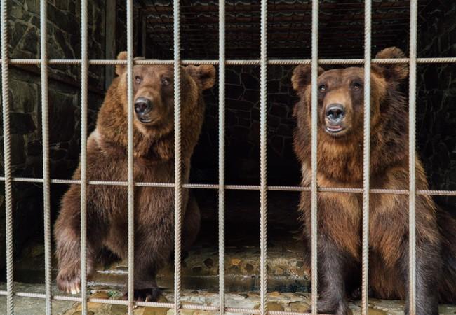 Dasha et Lelya dans la cage dans laquelle elles étaient enfermées