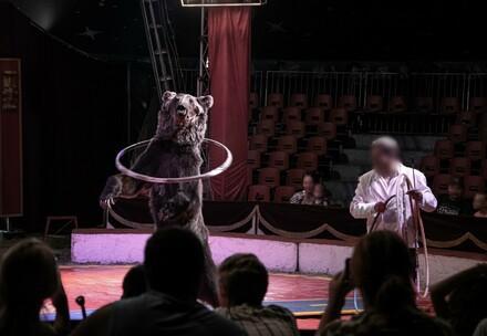 Bear in circus