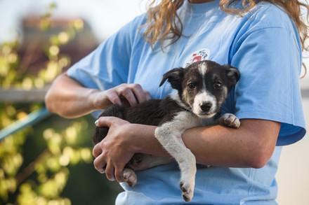 VIER PFOTEN hilft Tieren weltweit