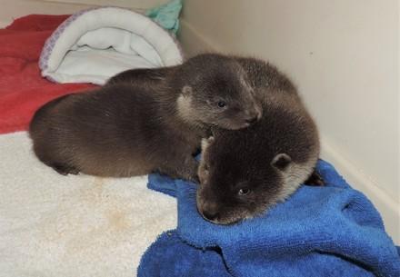 Zwei Otter-Mädchen gegen den Rest der Welt.