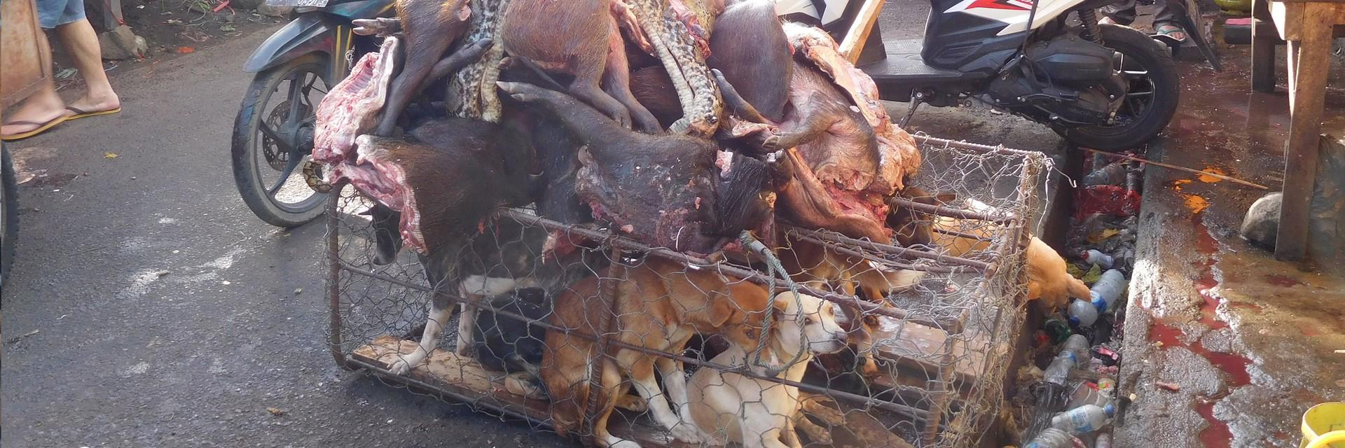Dead animals above cages of live dogs