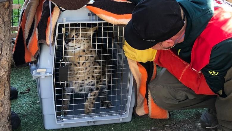 Kiano war nervös vor seiner Freilassung