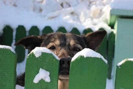 Dog behind a fence