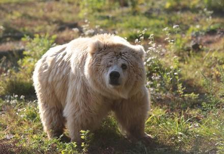 Bear Kristina