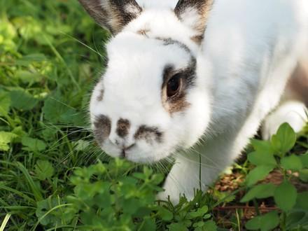 infos sur les lapins