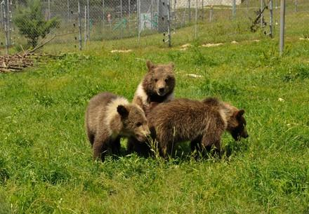 Bears Jenny, Tobi and Moris