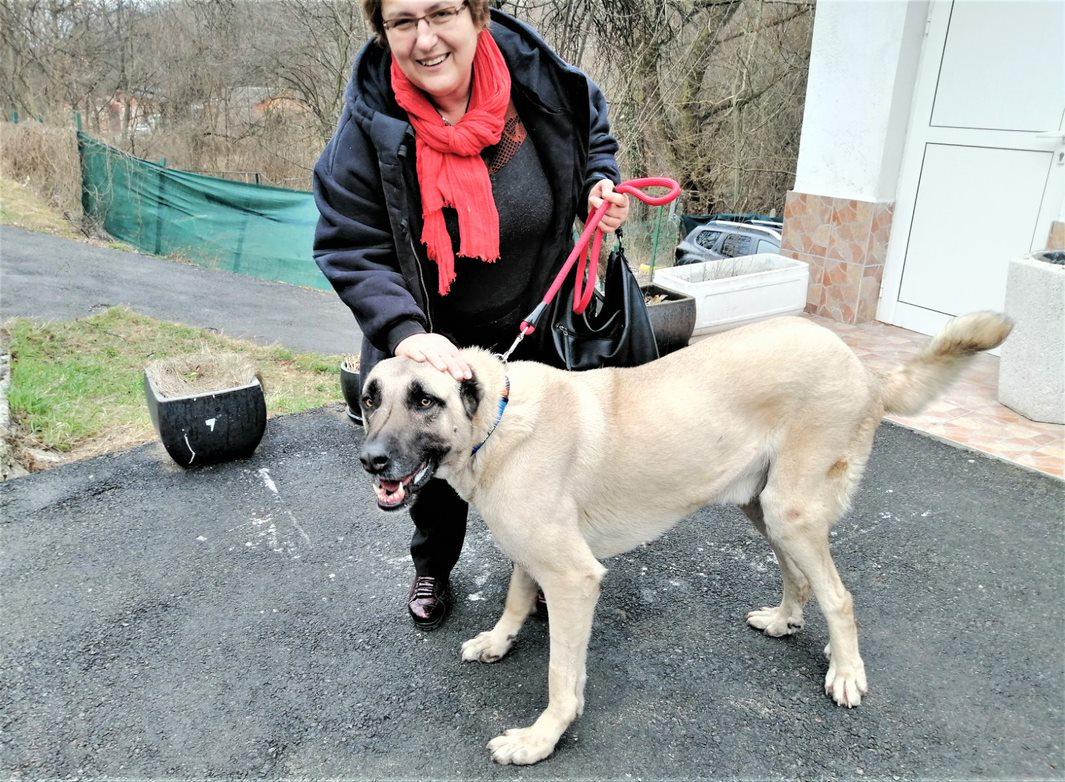 куче Рафи