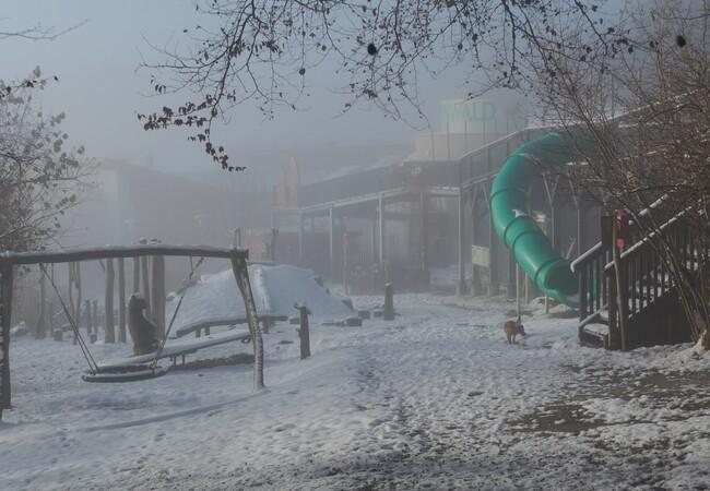 Blick auf eine winterlichen Besucherweg im Bärenwald, Hund Keksi ist auch zu sehen