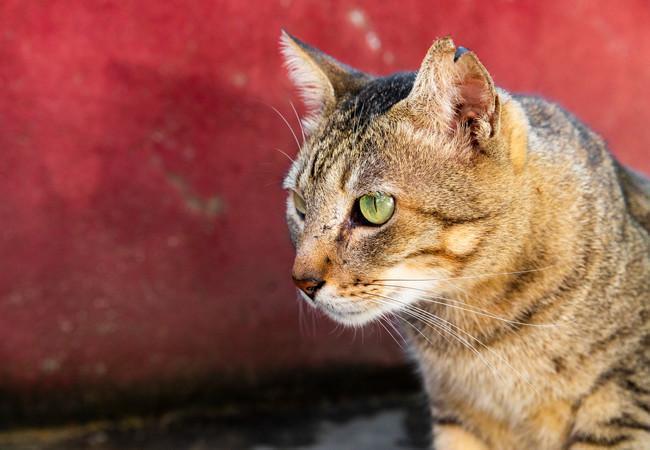 Cat Luke