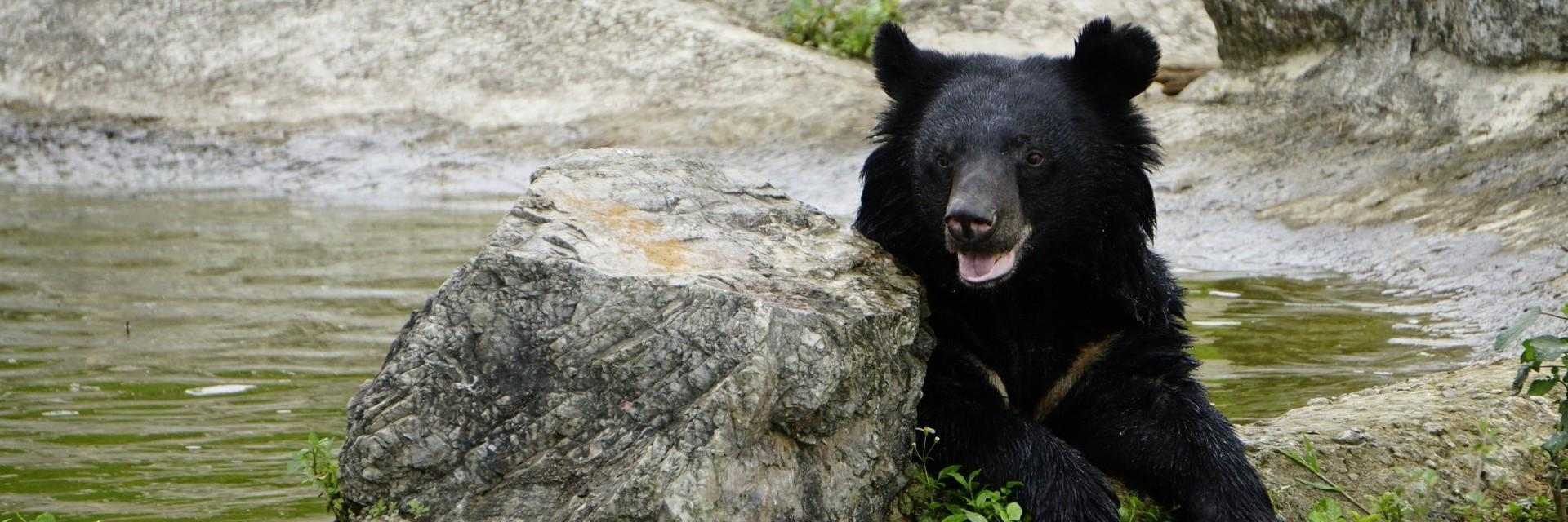 Happy rescued bear at our sanctuary