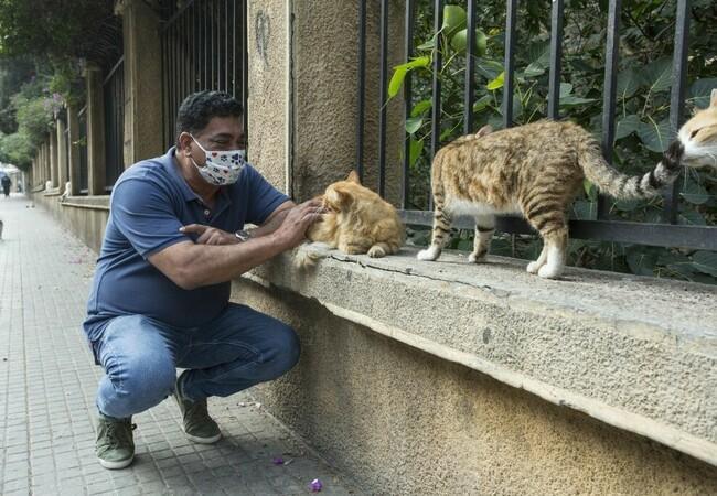 Mitarbeiter streichelt Katzen
