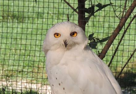 Eule in der Eulen- und Greifvogelstation Haringsee (EGS)