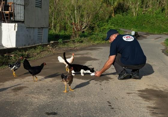 Helping animals following Hurricane Maria, Puerto Rico