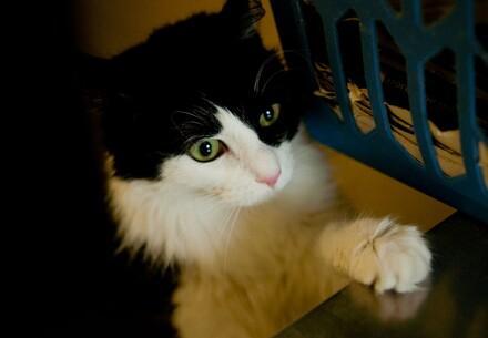 Un chat dans une caisse de transport